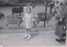 Freda's daughter with goats
