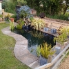 Ponds and fishkeeping