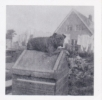 Our dog bonzo in Park Gardens, Hawkwell late c1960