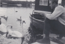 Feeding Swans on Houseboat holiday on Bridge Broad, Wroxham 1962/3