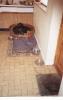 Sam as a puppy_18
