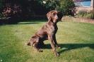 Sam as a puppy_19