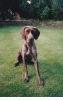 Sam as a puppy_20