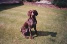 Sam as a puppy_21