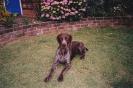 Sam as a puppy_22