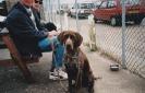 Sam as a puppy_29