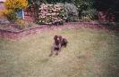 Sam as a puppy_32