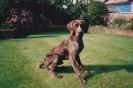 Sam as a puppy_33