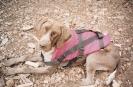 Sam as a puppy_36