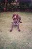 Sam as a puppy_40