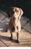 Sam as a puppy_48