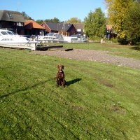 Max sitting on my newly flailed moorings lawns_1